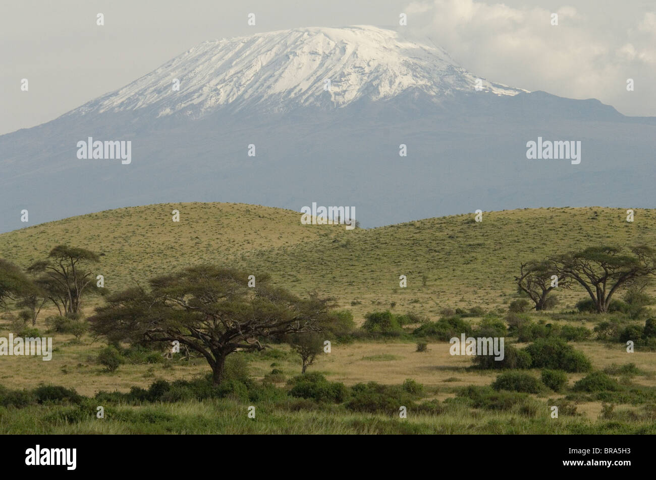 SNOW CAPPED MOUNT KILIMANJARO WITH ACACIA TREES IN FOREGROUND AMBOSELI NATIONAL PARK KENYA AFRICA - Stock Image