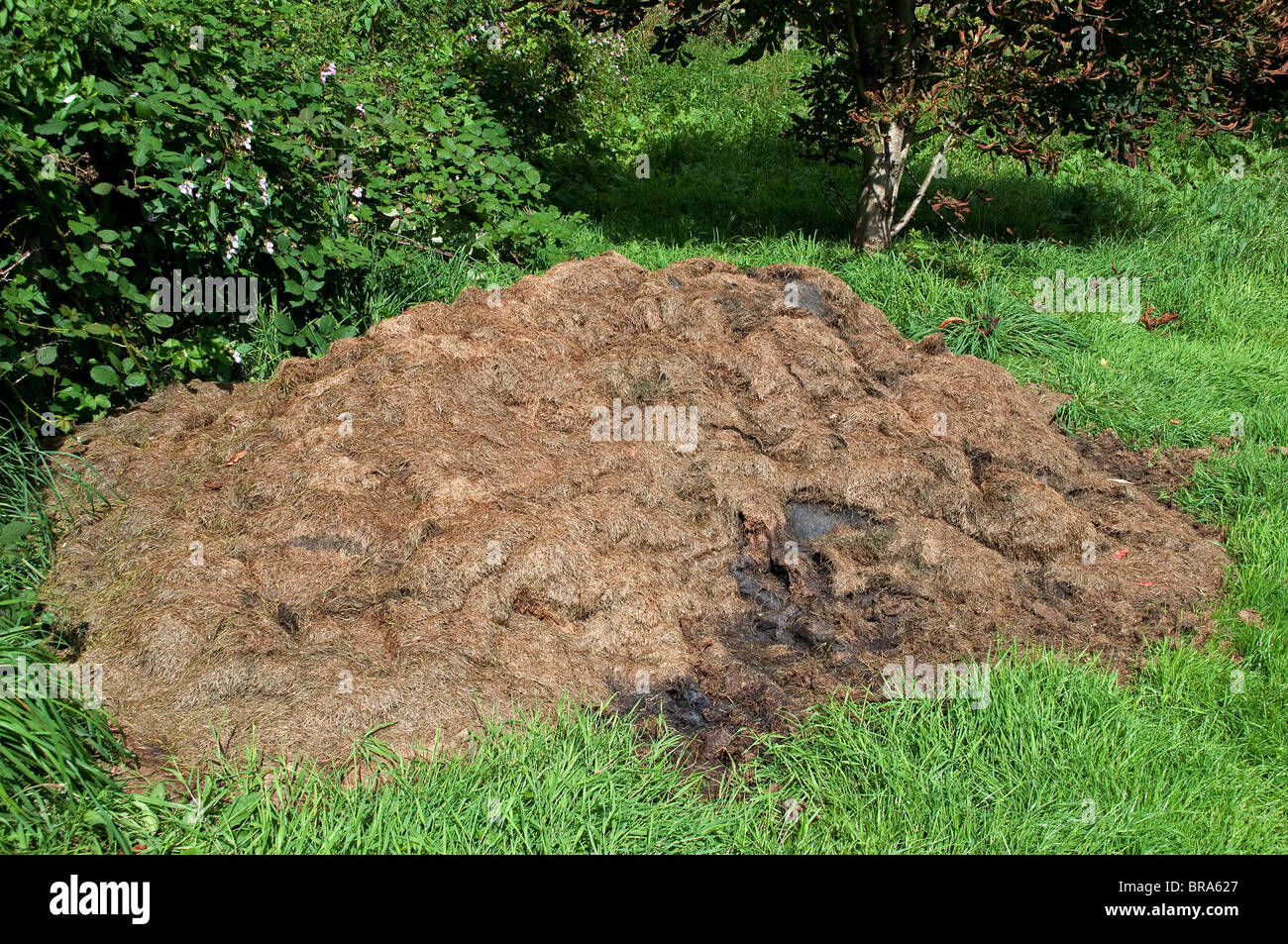 a pile of grass cuttings being left to make compost - Stock Image