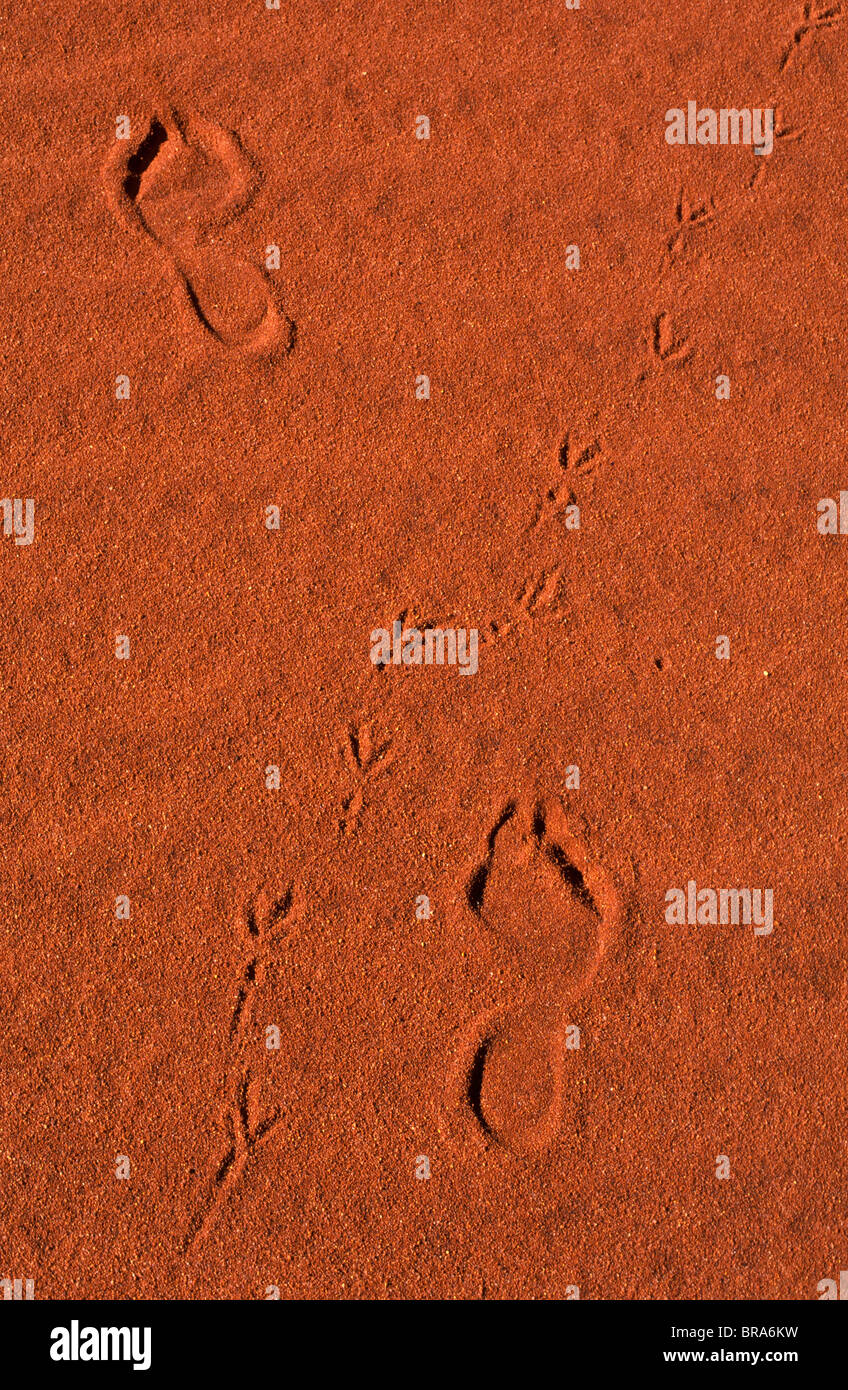 Tracks and footprints, outback Australia - Stock Image