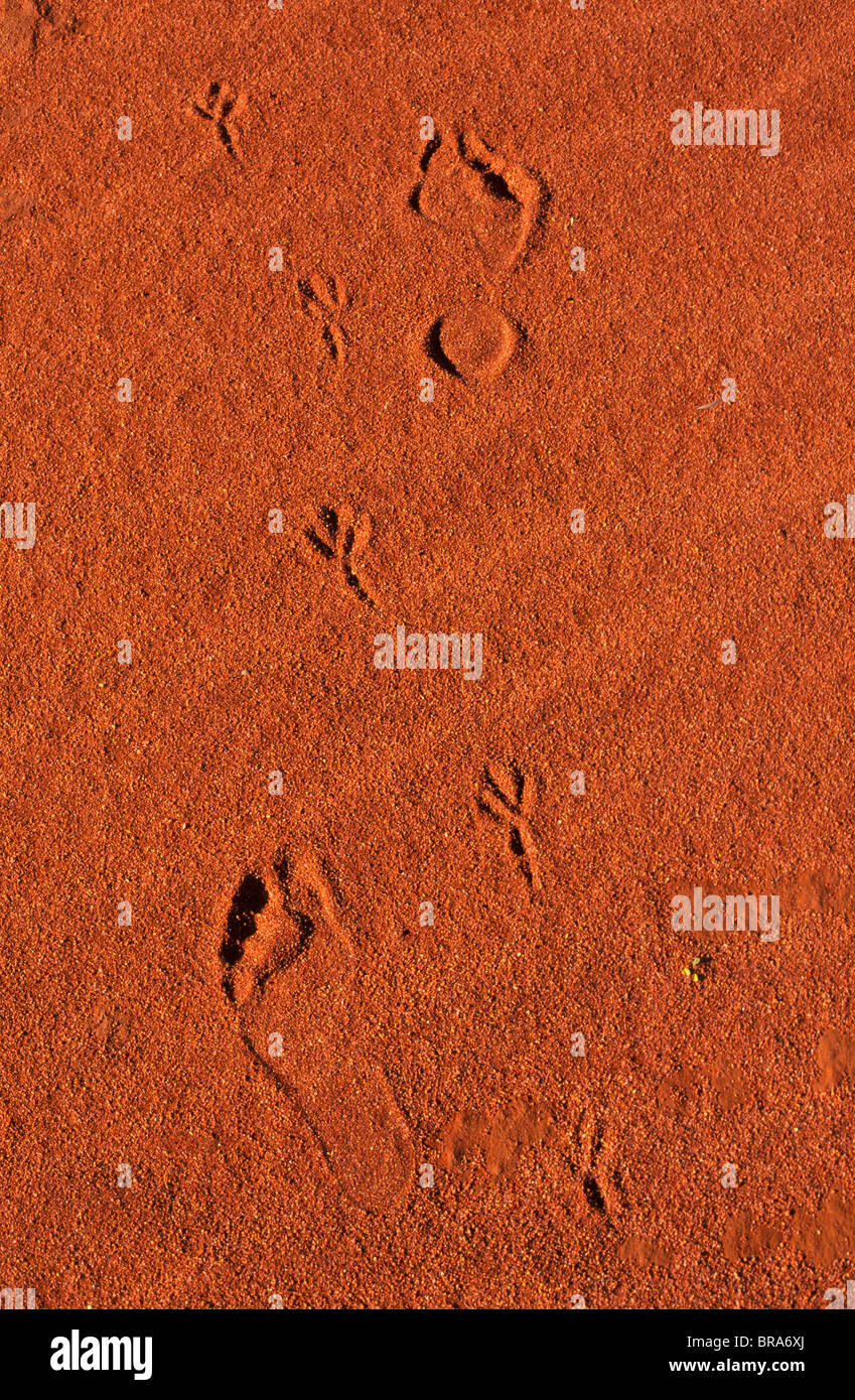 tracks and footprints, South Australia - Stock Image