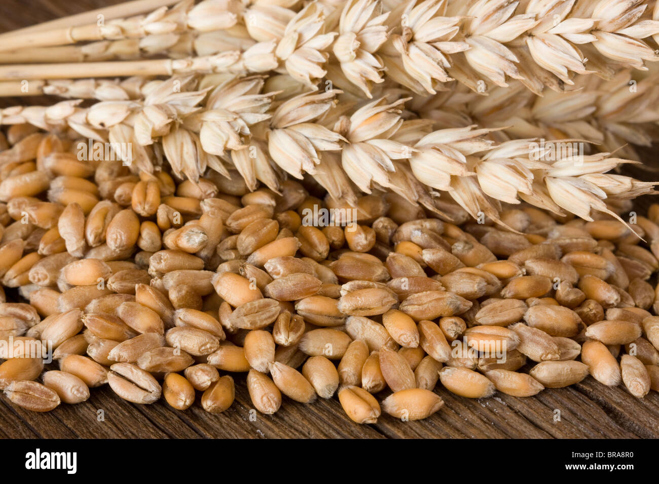 Wheat on wooden desk - Stock Image