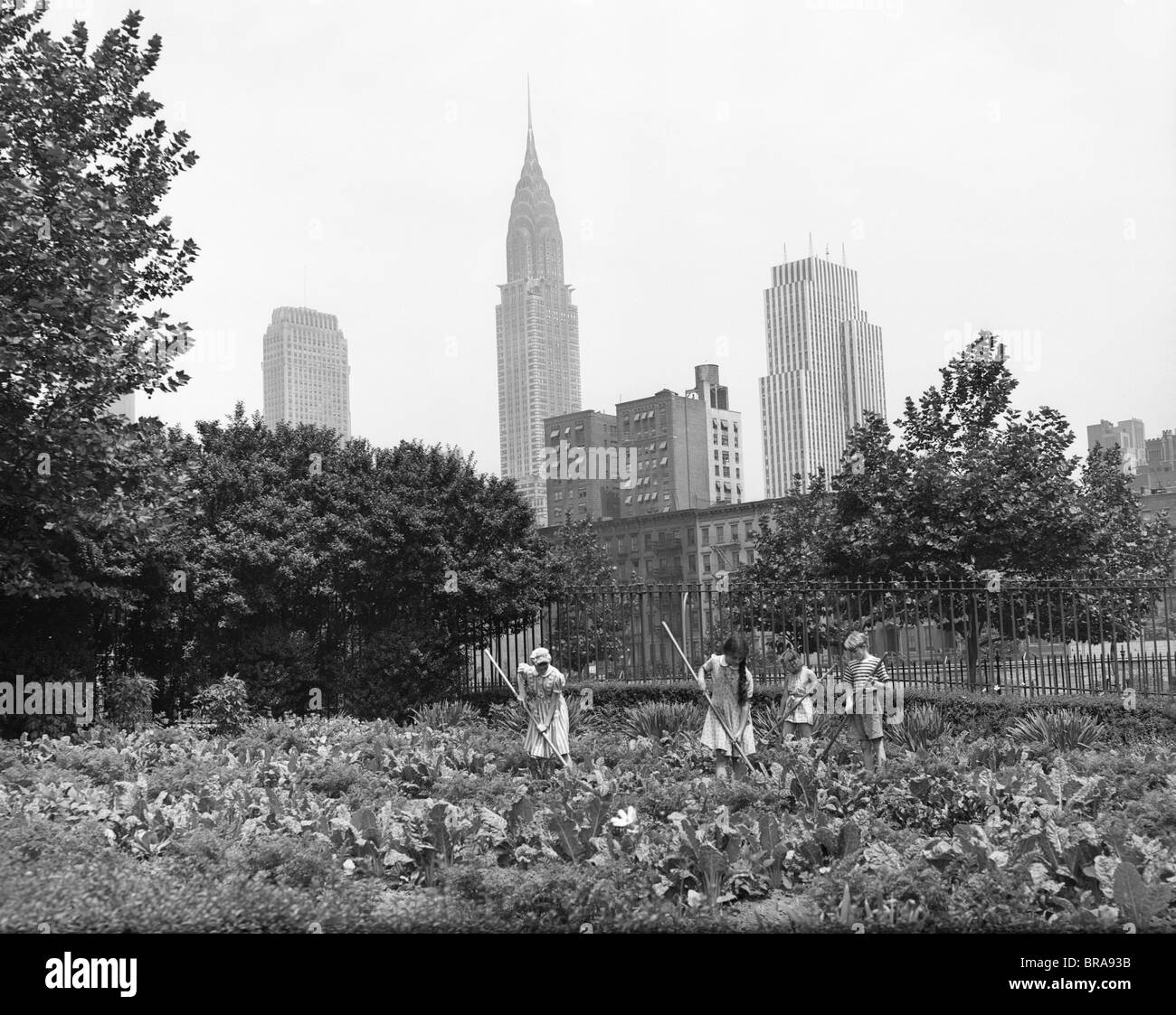 1940s 1943 CHILDREN WORKING IN VICTORY GARDENS IN ST. GABRIEL'S PARK NEW YORK CITY CHRYSLER BUILDING VISIBLE - Stock Image