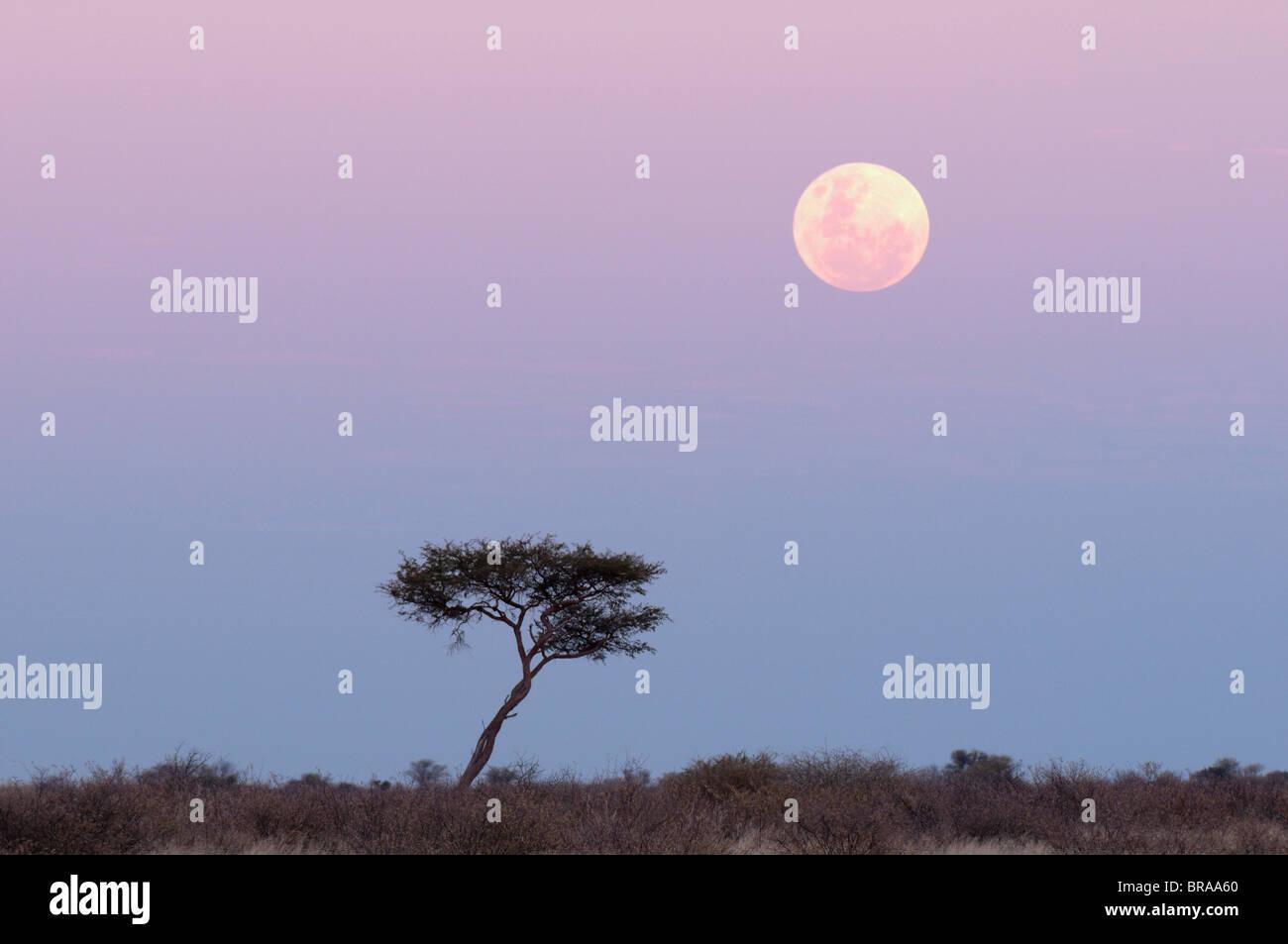 Moonrise, Deception Valley, Central Kalahari Game Reserve, Botswana, Africa - Stock Image