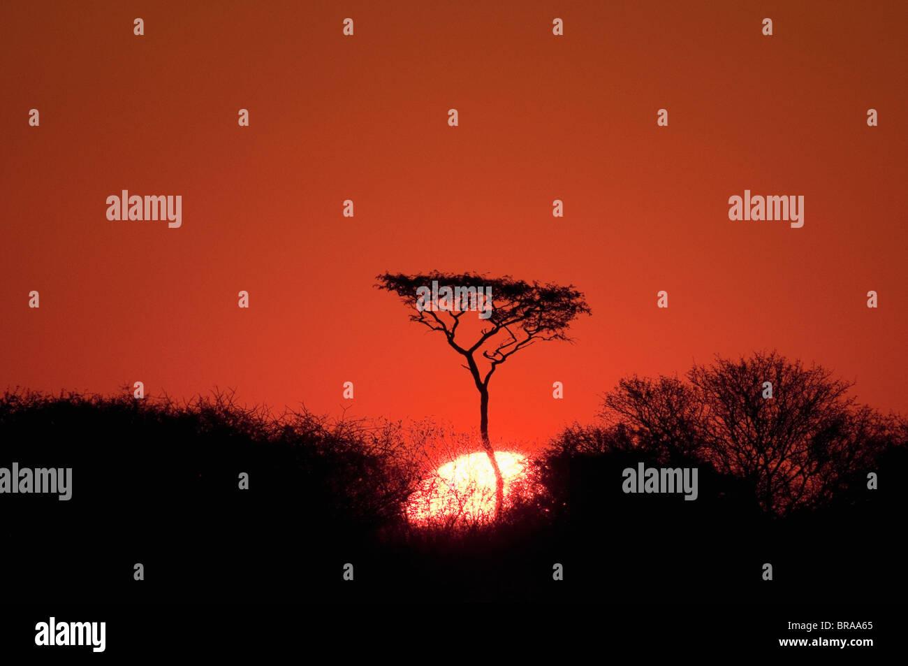 Sunset, Deception Valley, Central Kalahari Game Reserve, Botswana, Sgtivs - Stock Image