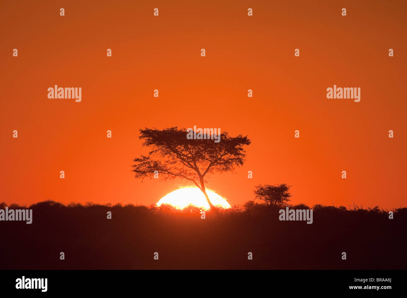 Deception Valley, Central Kalahari Game Reserve, Botswana, Africa - Stock Image