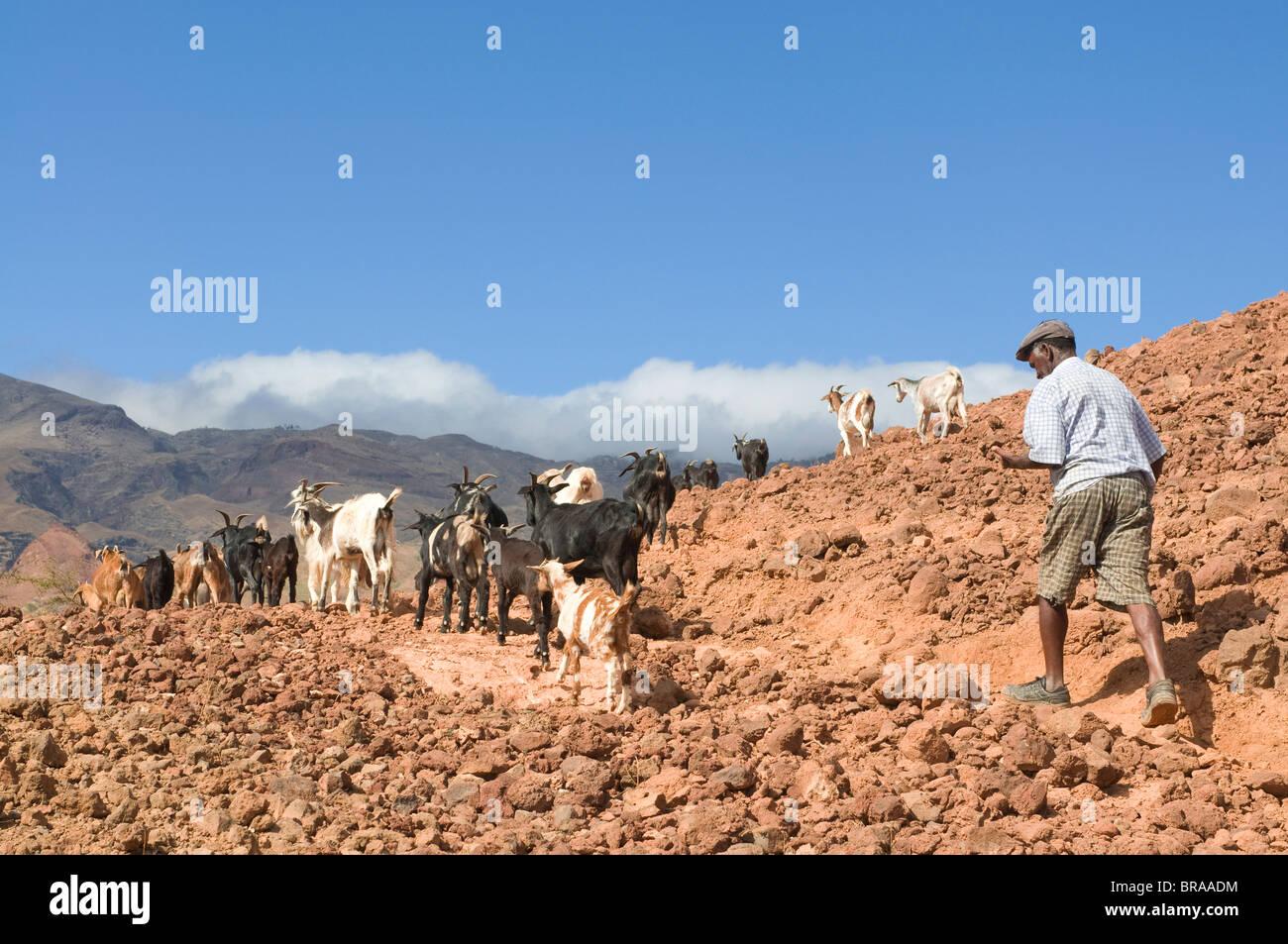 Goats Africa Stock Photos & Goats Africa Stock Images - Alamy