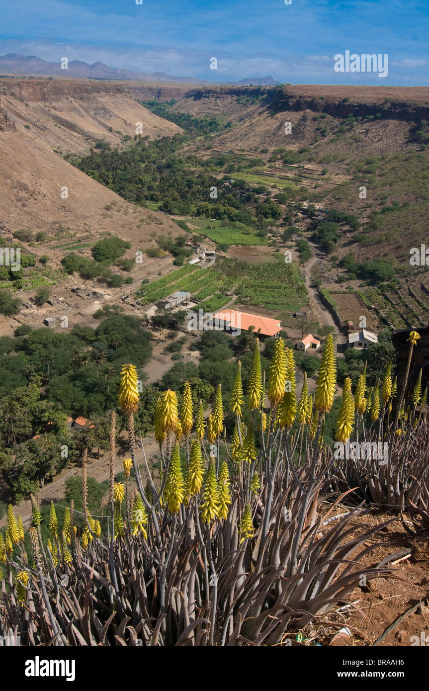 View over valley and blooms, Ciudad Velha (Cidade Velha), Santiago, Cape Verde Islands, Africa - Stock Image