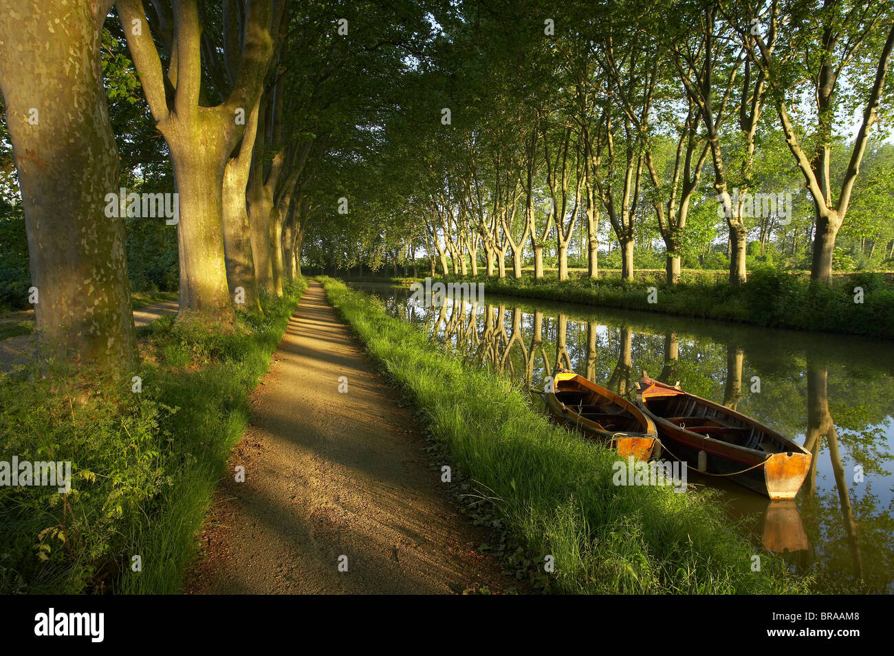 The tow path with row boats on the Canal du Midi, nr Carcassonne, Languedoc, France - Stock Image