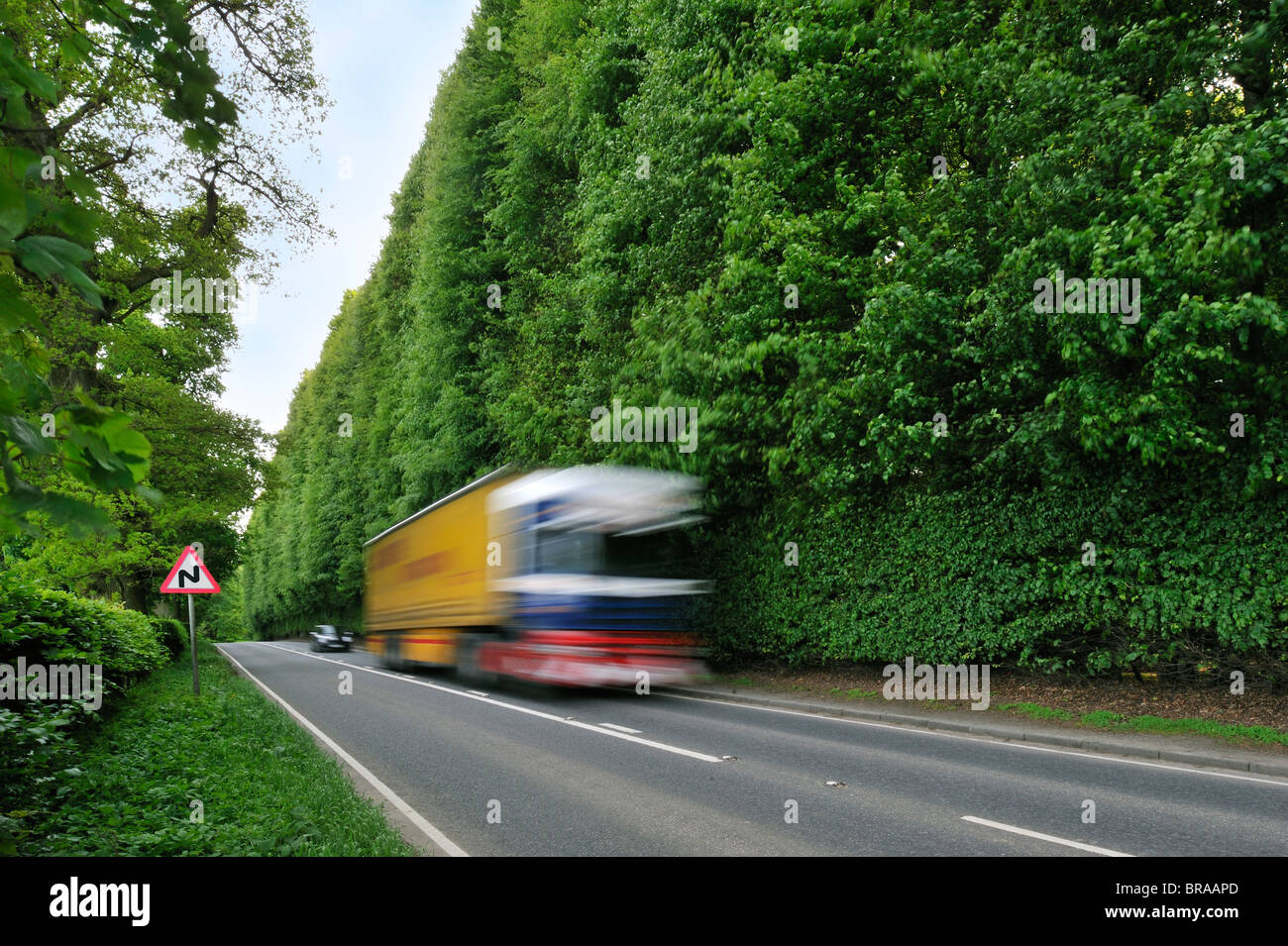 The Meikleour Beech Hedge (Fagus sylvatica), the tallest and longest hedge on earth, Scotland, UK - Stock Image