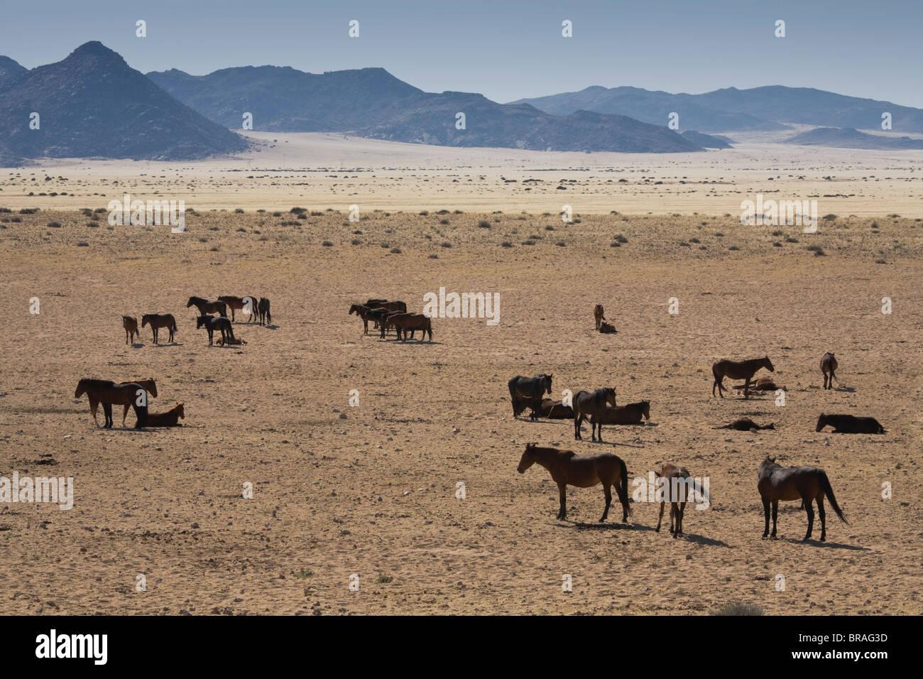 Wild horses, near Aus, Namib Desert, Namibia, Africa - Stock Image