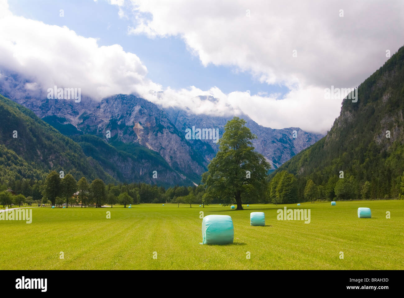 Valley with meadows and hay bales, Logarska Dolina, Slovenia, Europe - Stock Image