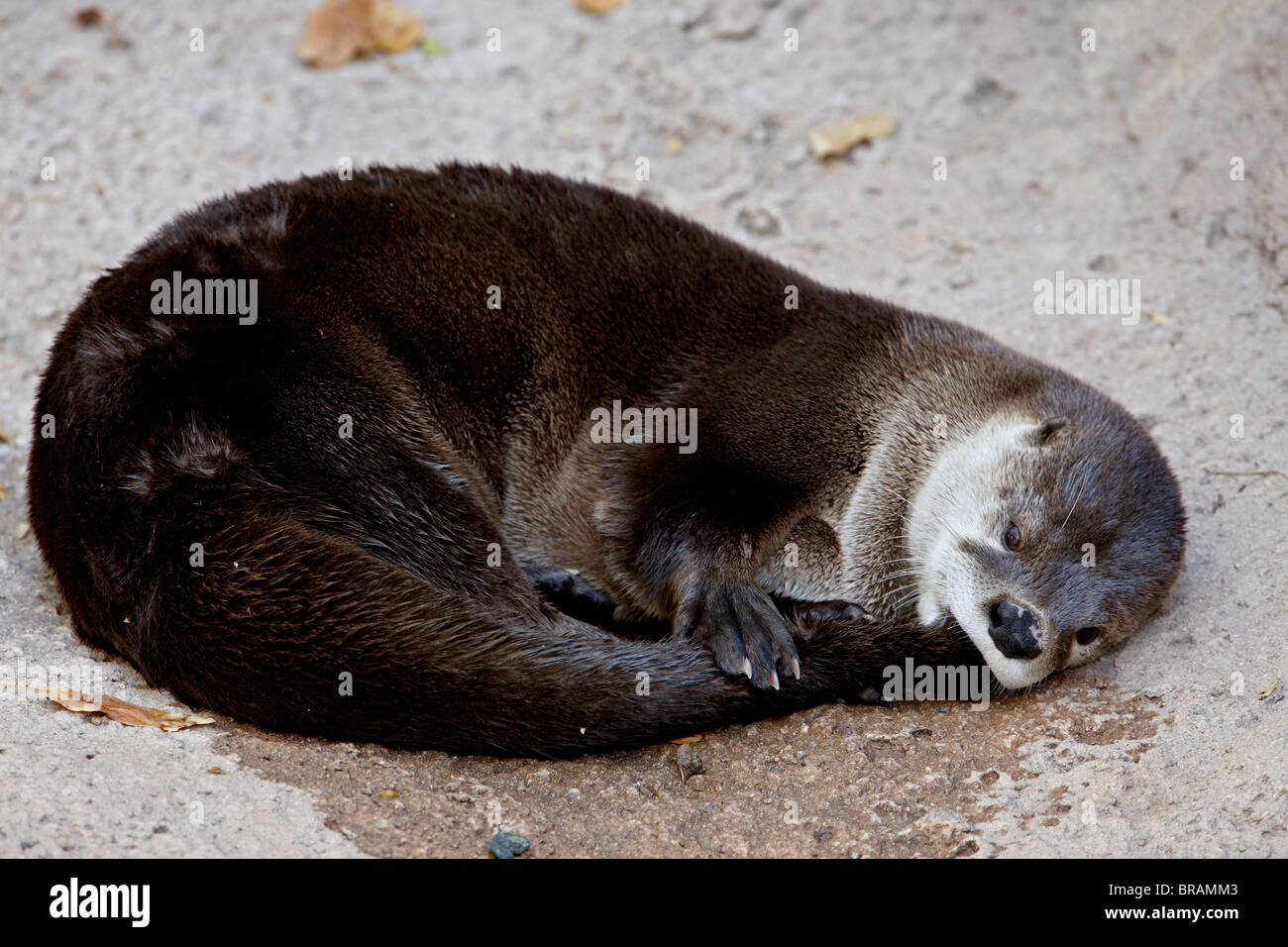 Otter Tail