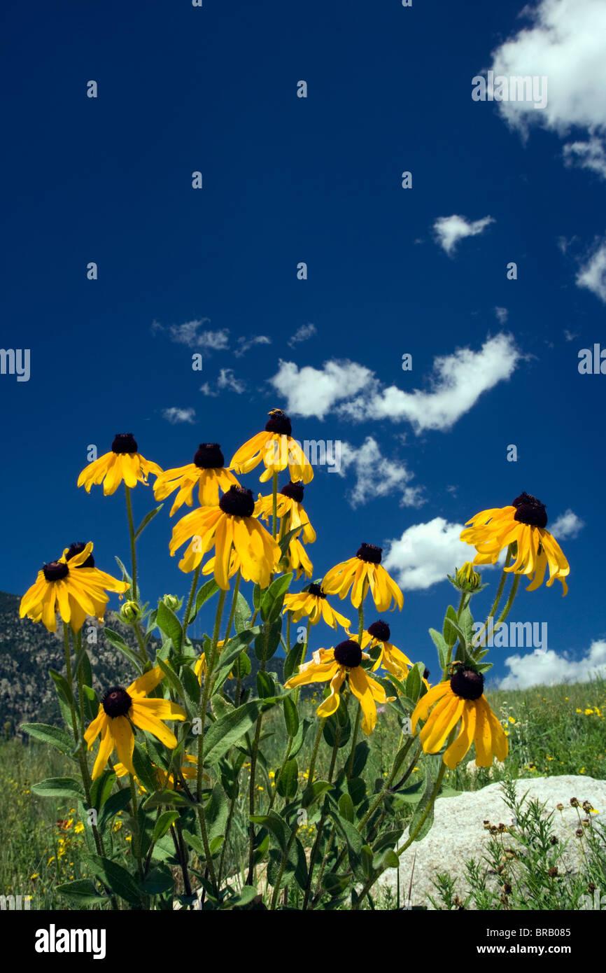Wild Flowers In Cheyenne Mountain State Park Colorado Springs