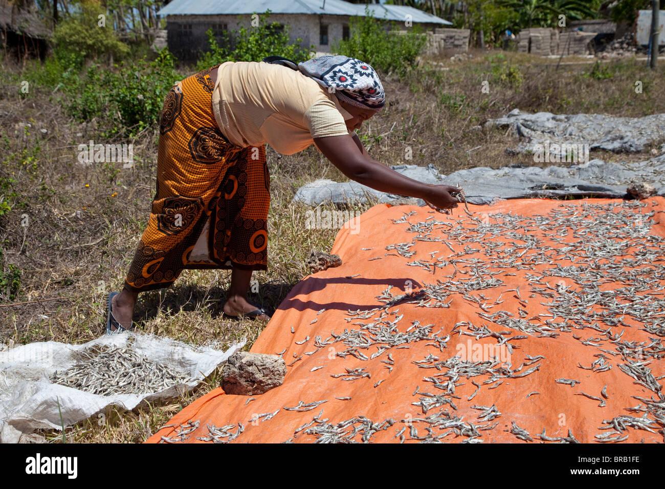 Zanzibar, Tanzania. Lady Spreading Anchovies to Dry in Sun. The lady wears a khanga cloth around her waist. - Stock Image