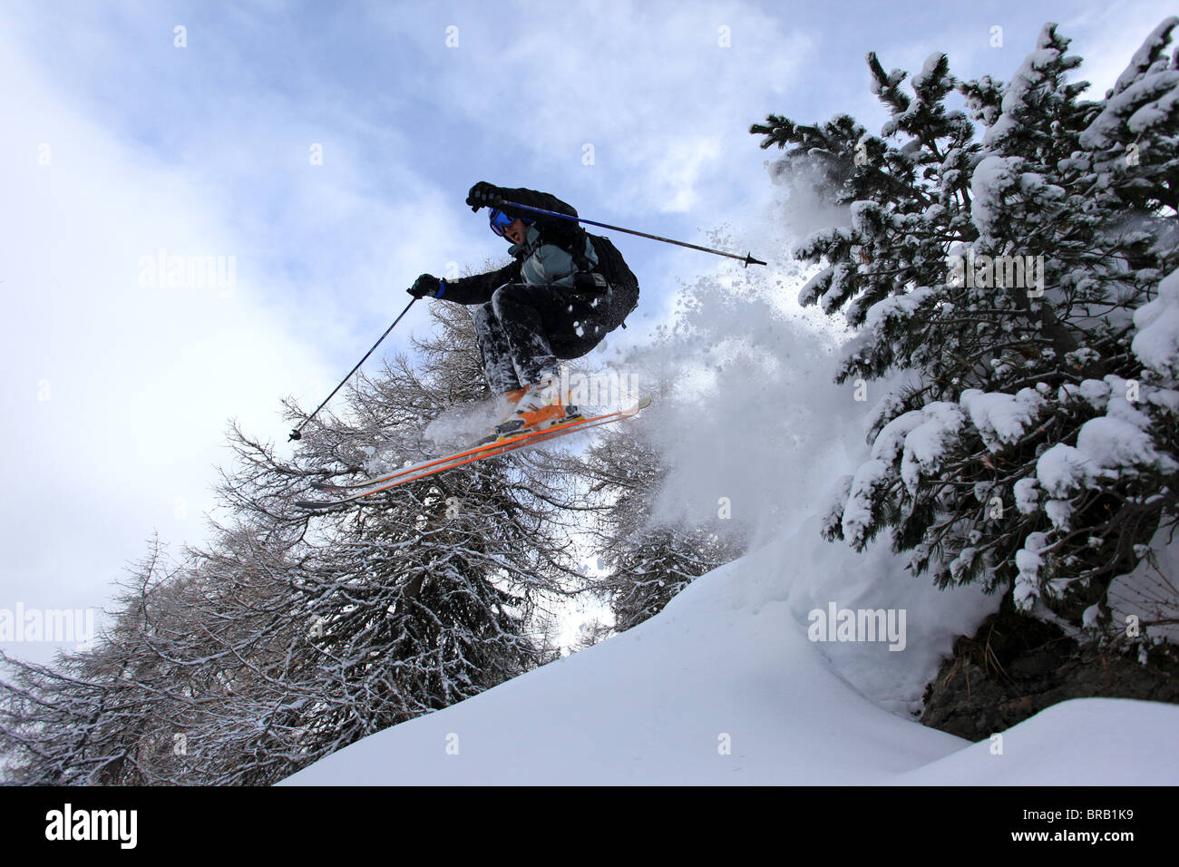 A skier jumps over some rocks and between pine trees lifting powder snow on a Val Gardena off piste slope - Stock Image