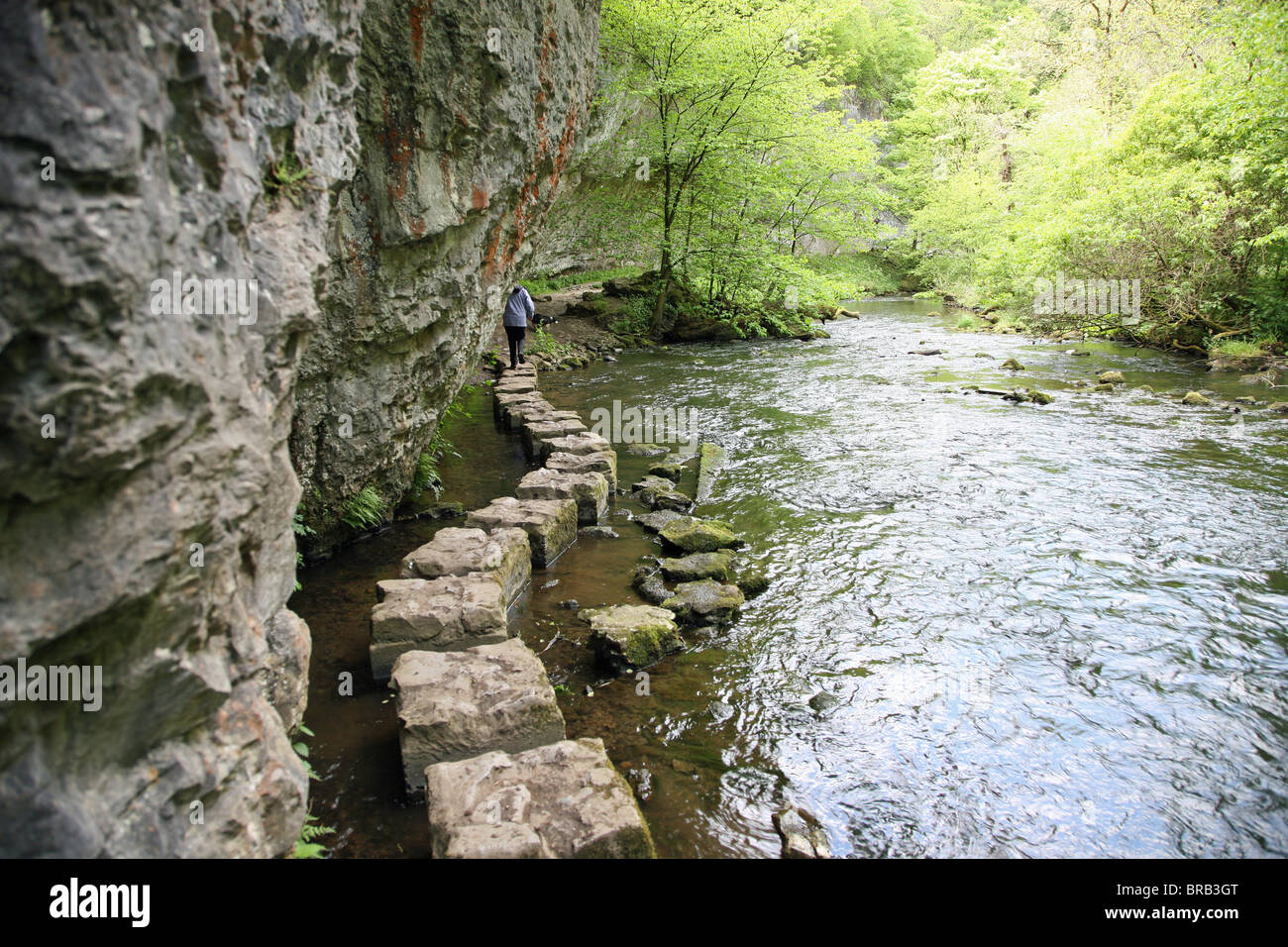 Limestone Stepping Stones On The River Wye At Chee Dale