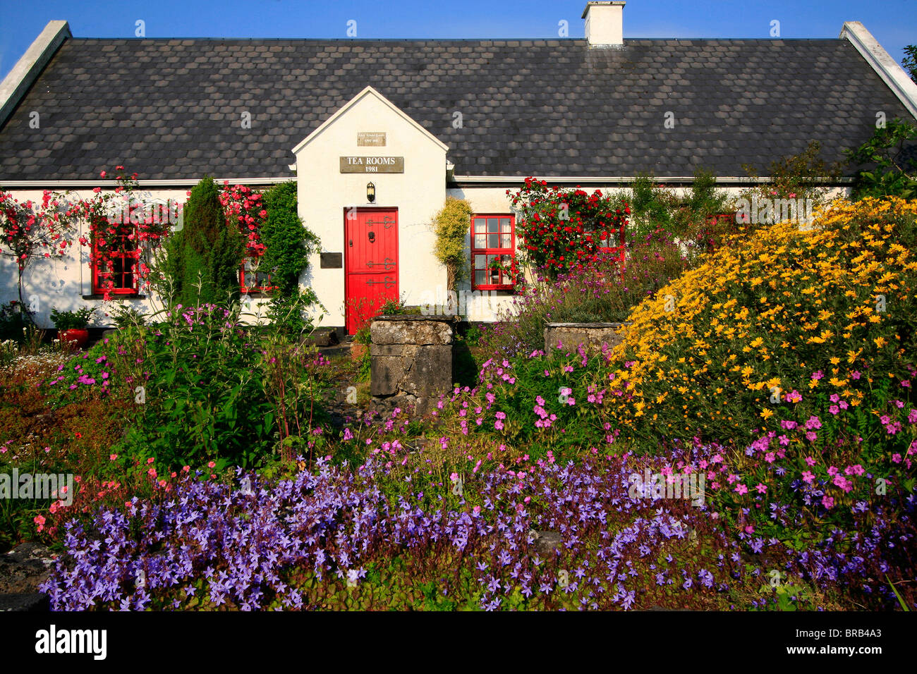Ballyvaughan,Co Clare,Ireland;Tea Rooms In A Traditional Cottage,With Lush Flowers In Foreground - Stock Image