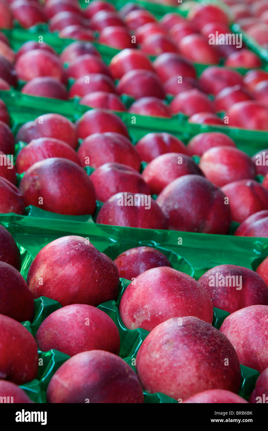 Green plastic racks of red nectarines trailing off to soft focus - Stock Image