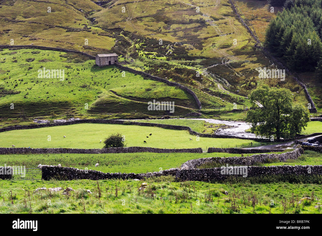 Yorkshire Dales barn and landscape at Beckermonds, Langstrothdale, England - Stock Image