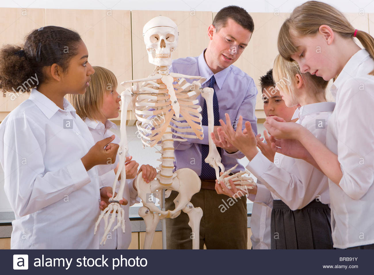 School children listening to biology teacher explain human skeleton - Stock Image