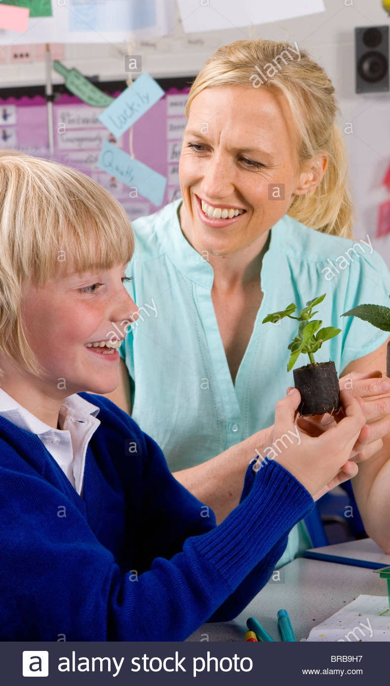 Teacher and school boy looking at plant seedling in classroom - Stock Image