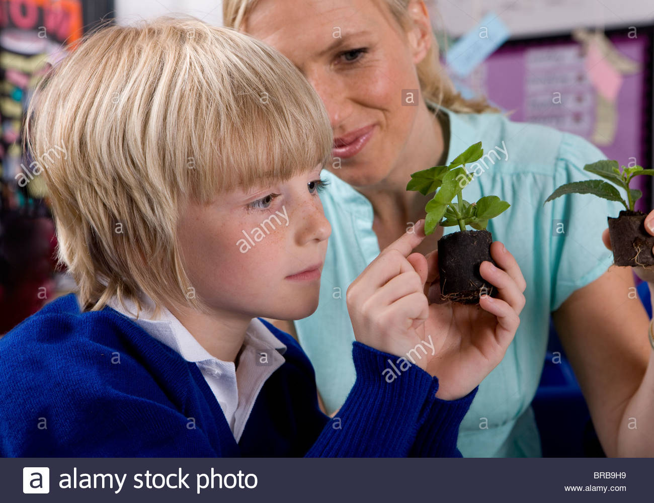Teacher and school boy looking at plant seedlings in classroom - Stock Image