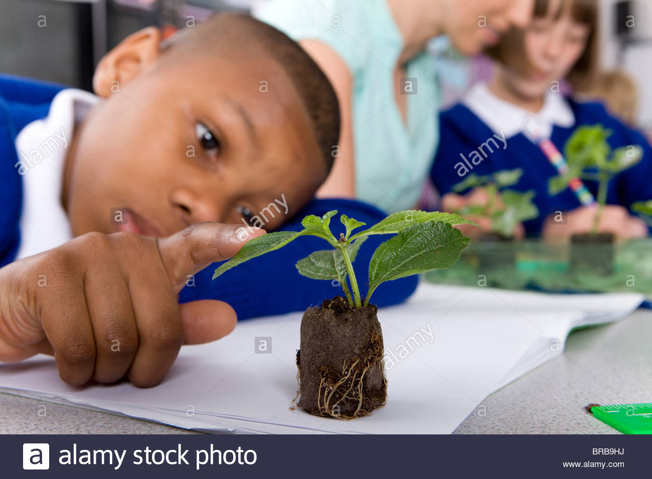 Serious school boy looking at plant seedling in classroom - Stock Image