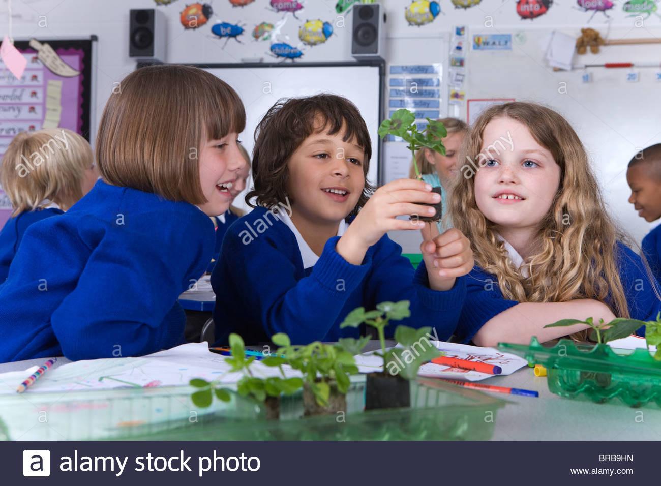 School children looking at plant seedlings on desk - Stock Image