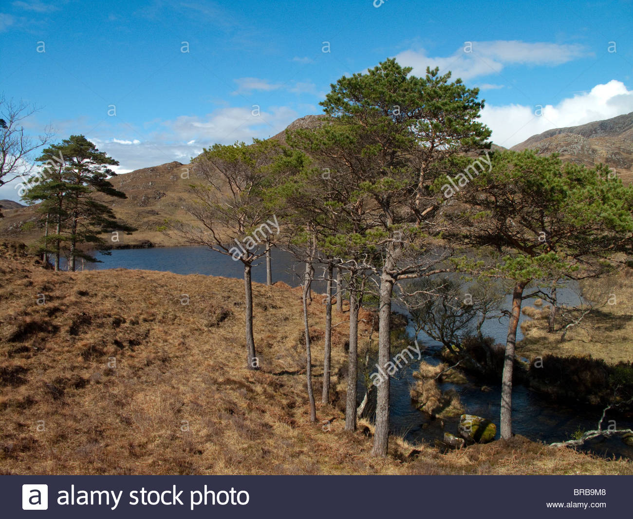 Trees along remote stream under blue sky - Stock Image