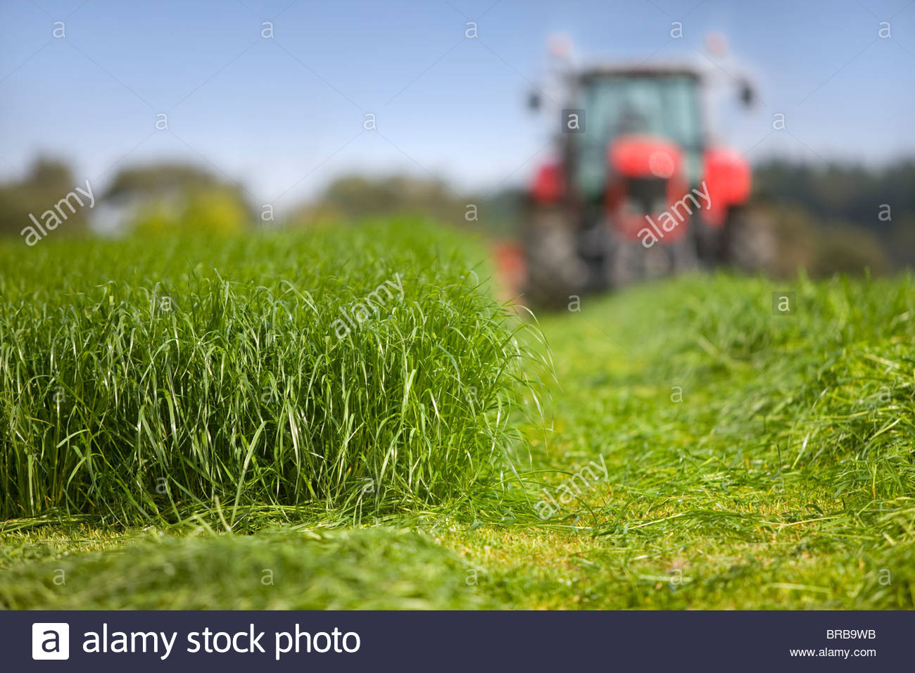 Tractor cutting silage in farm field - Stock Image