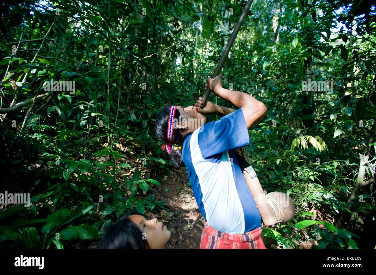 An Achuar man demonstrates using a blowgun, Amazon, Ecuador - Stock Image