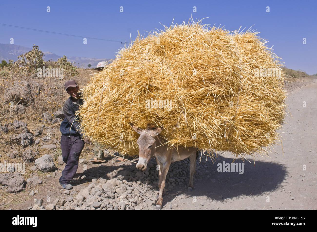 Donkey loaded with hay, Eastern Ethiopia - Stock Image