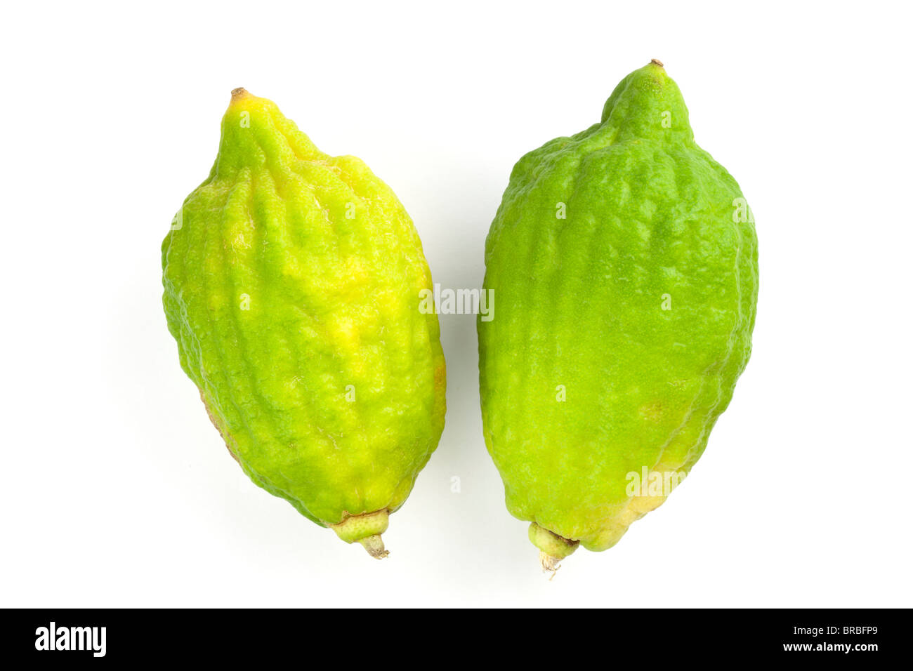 two kaffir limes on a white background - Stock Image