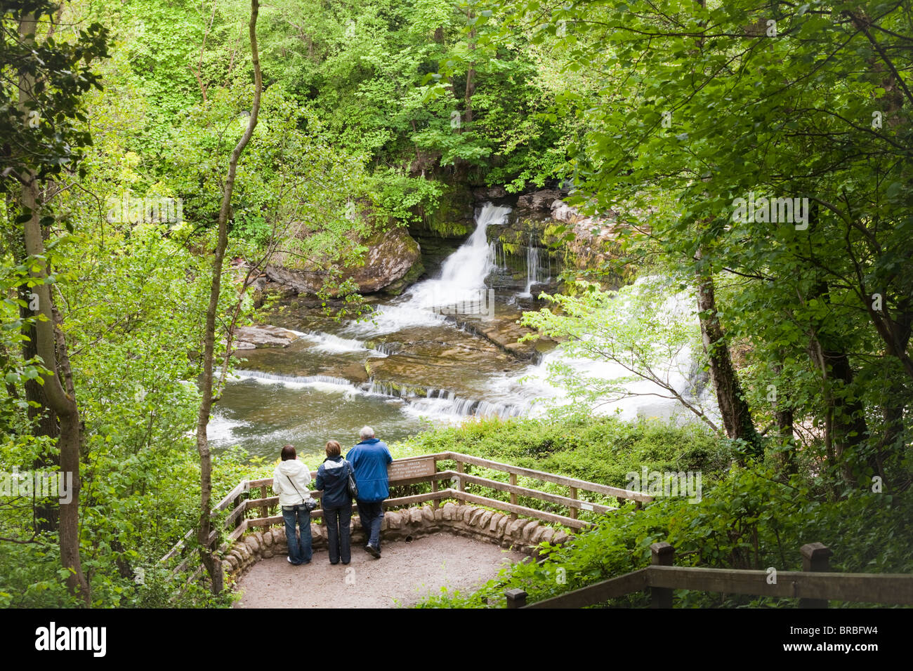 Visitors enjoying the Middle Falls on the River Ure at Aysgarth, North Yorkshire, Wensleydale, Yorkshire Dales National - Stock Image