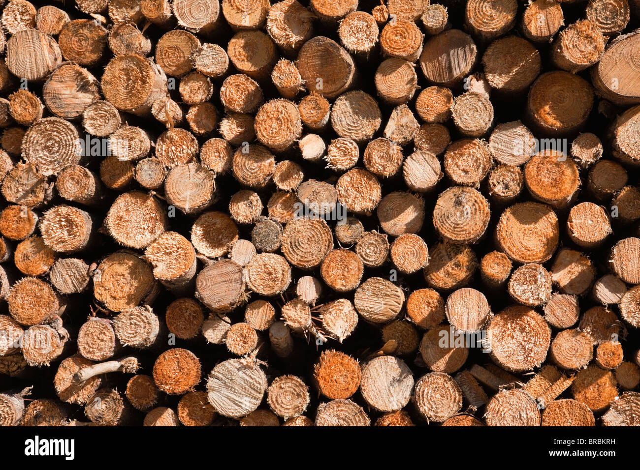 Logs Stock Photos & Logs Stock Images - Alamy