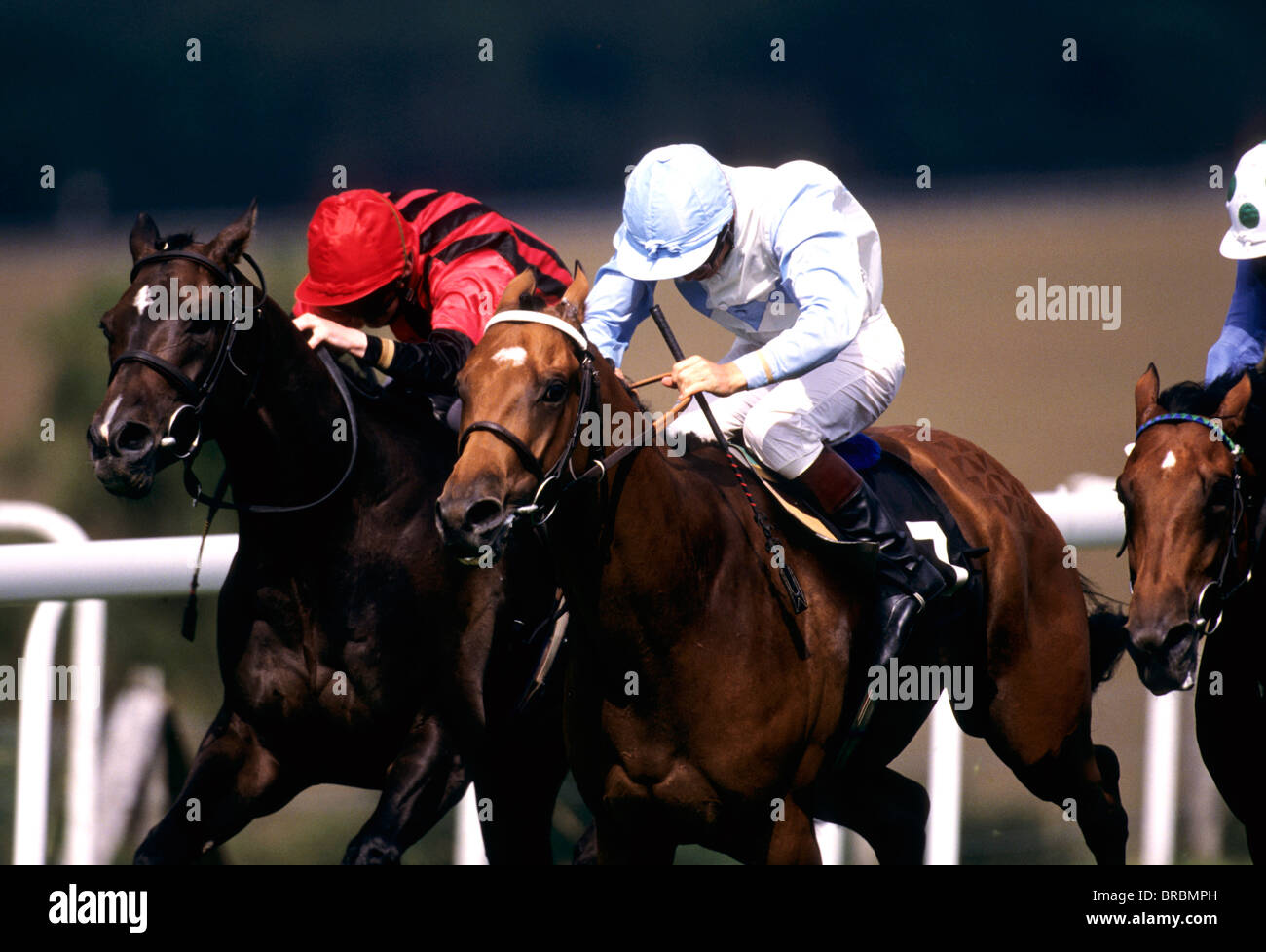 Jockeys on horse at race track lean forward as they gallop for finish line - Stock Image