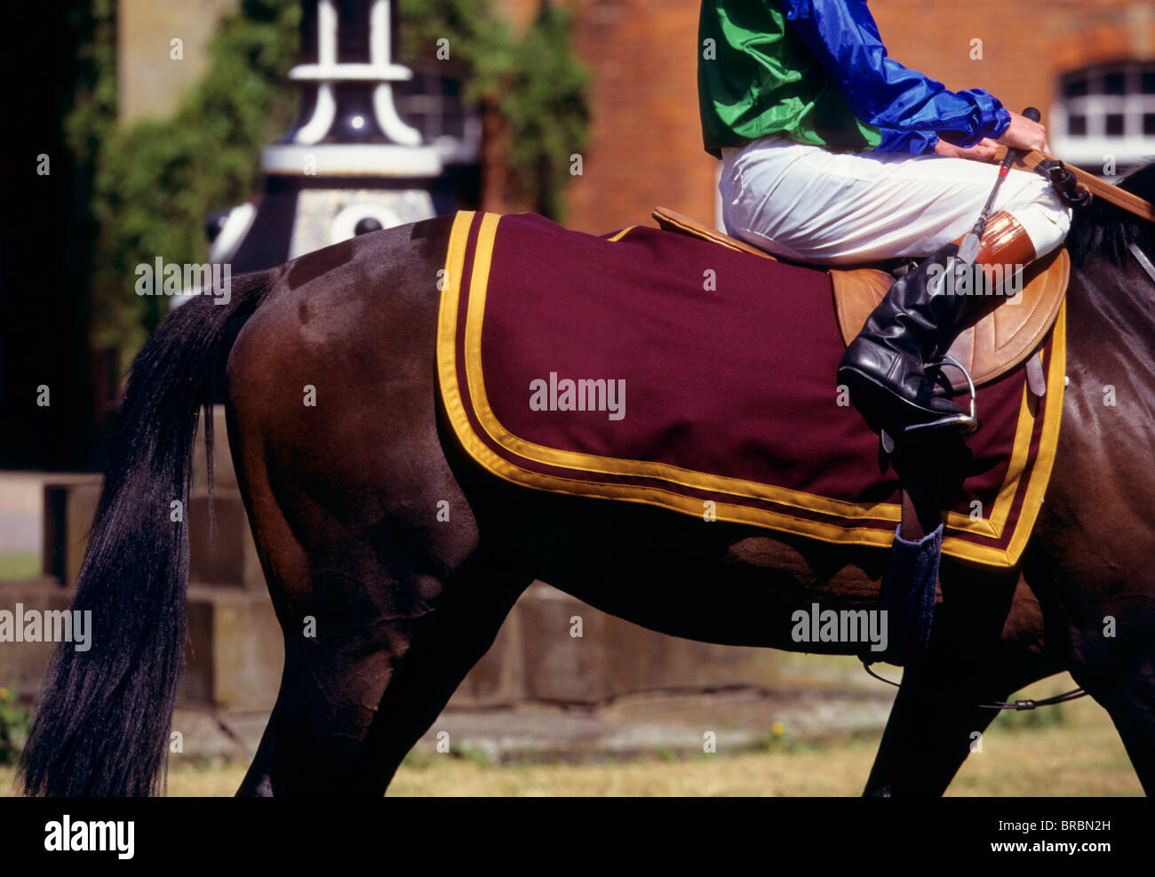 Jockey in owners colours walks his horse at race track - Stock Image