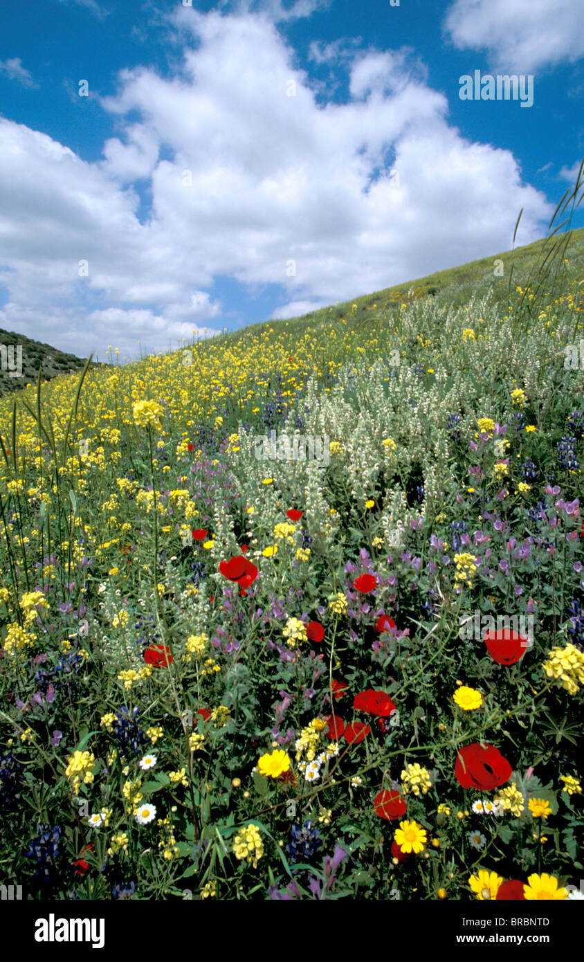 Springtime at Tel Shocha, at the entrance to Ha'ela Valley, Israel - Stock Image