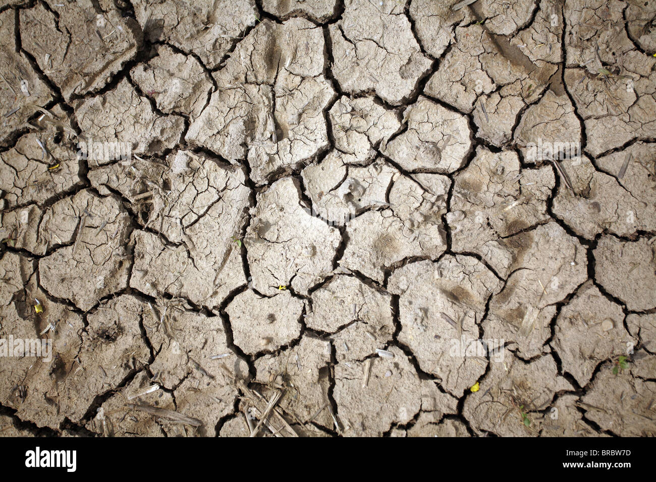 Parched land - Stock Image