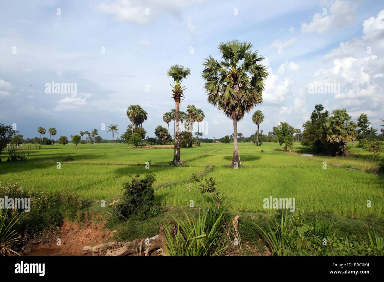 Cambodian countrside near Siem Reap, Cambodia Stock Photo