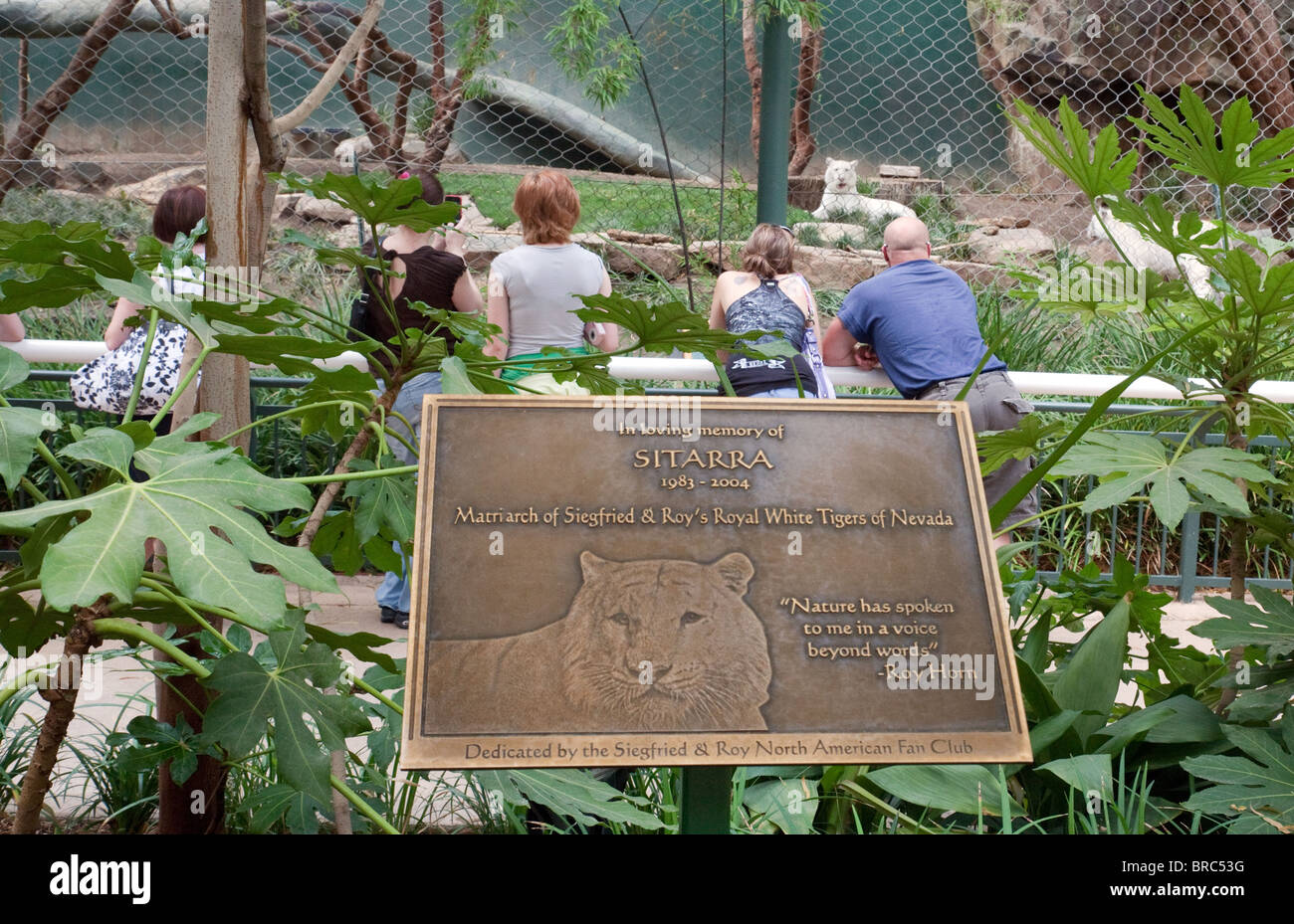 memorial to sitarra white tiger siegfried roys secret garden and dolphin habitat - Siegfried And Roy Secret Garden