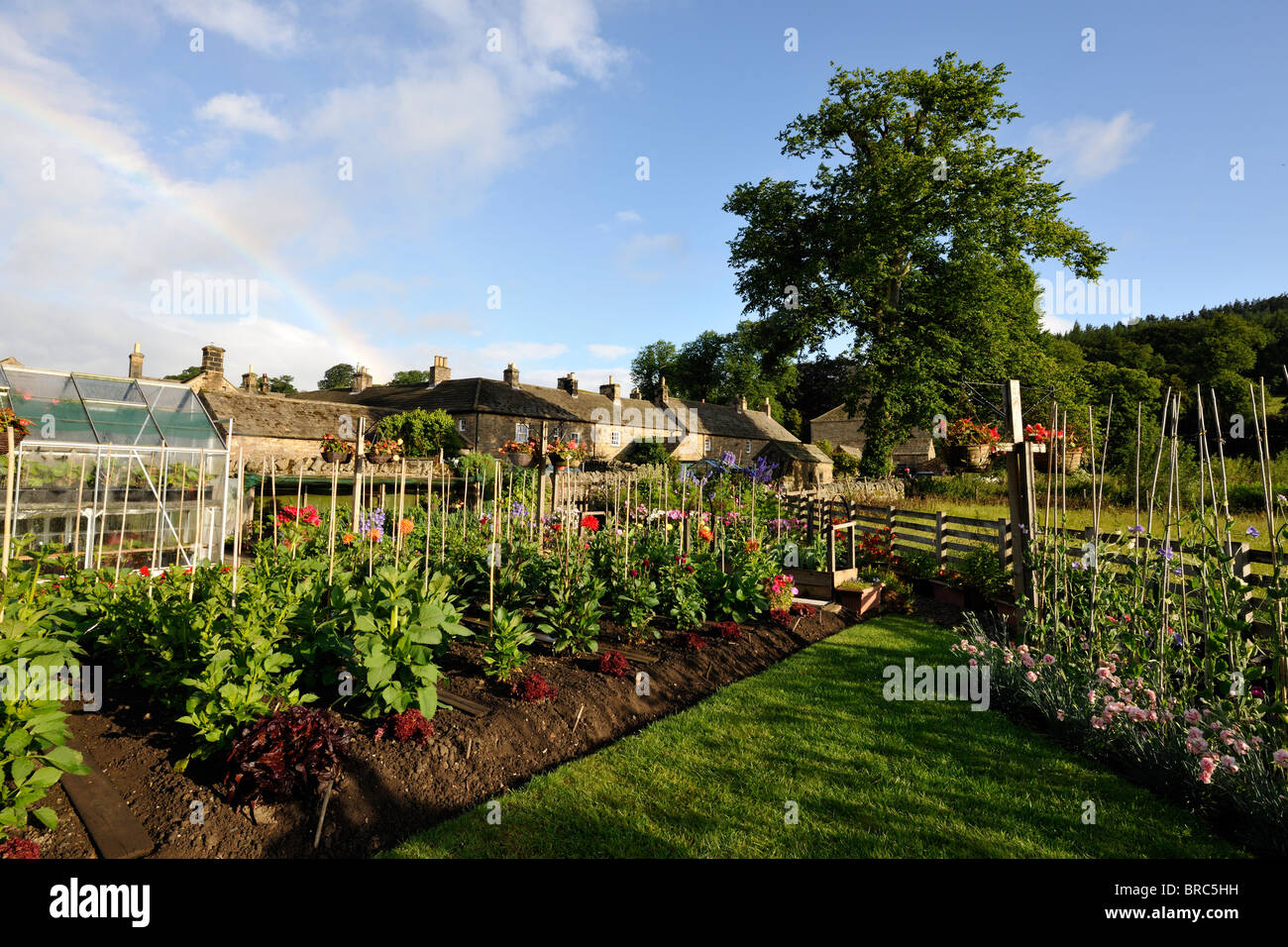 Ordered rows in a garden in the medieval village of Blanchland, Northumberland - Stock Image