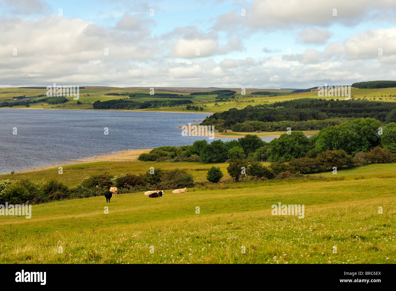 The Derwent reservoir in an area of outstanding natural beauty, Northumberland, England - Stock Image