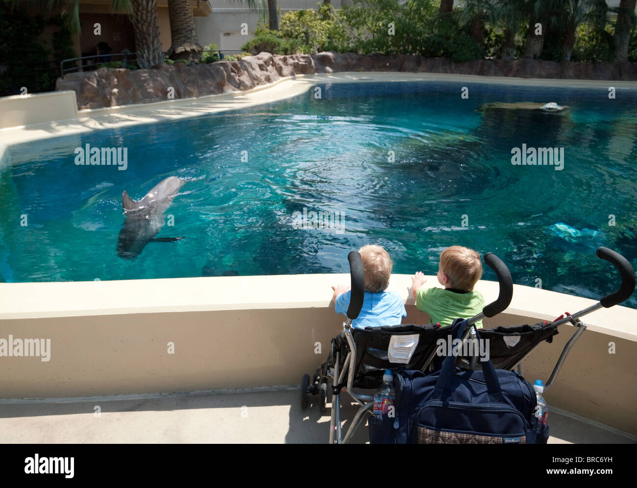 Young children watching the dolphins The Mirage Hotel, Las Vegas USA - Stock Image