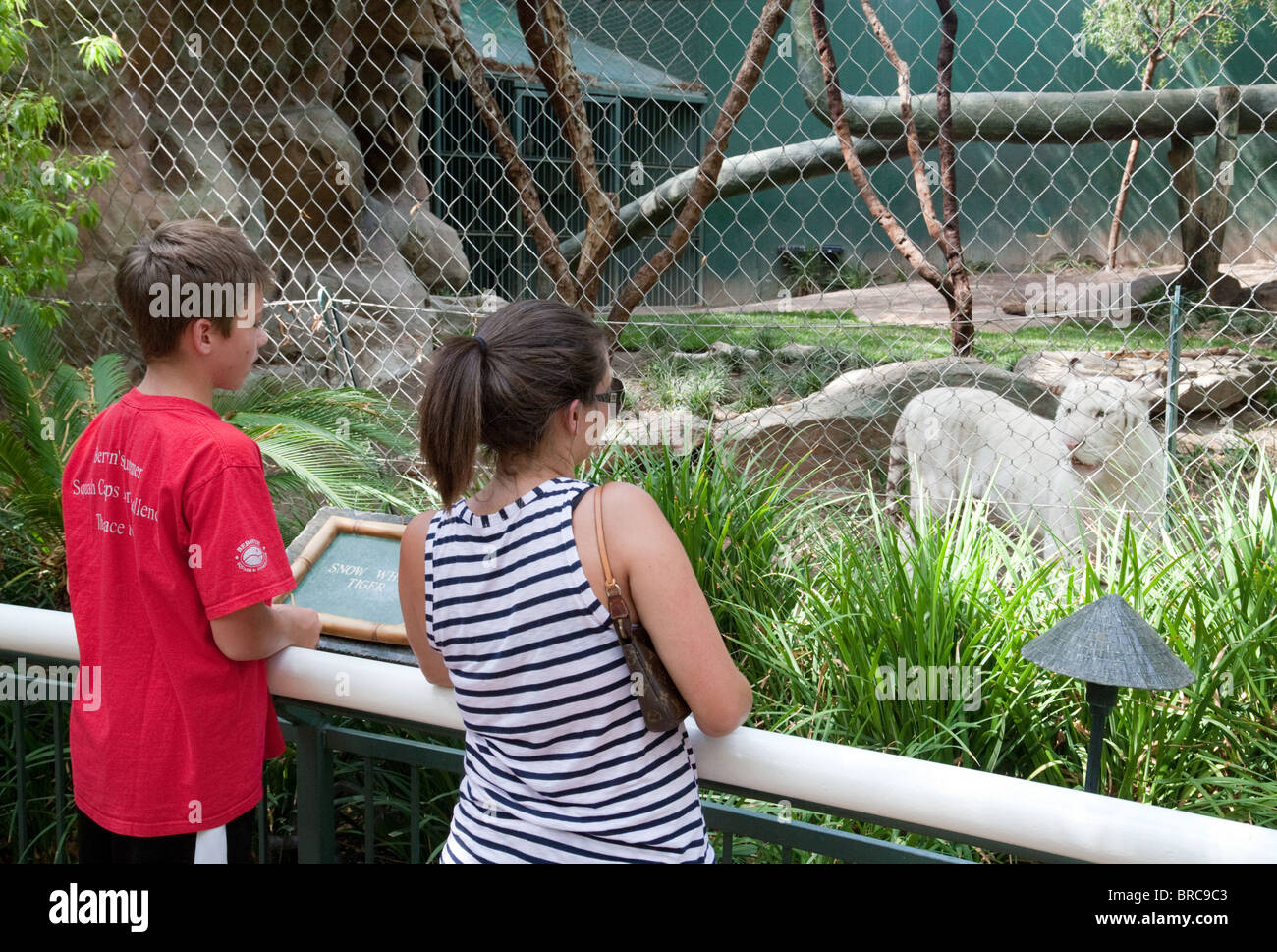 People looking at a white tiger, Siegfried & Roy's Secret Garden and Dolphin Habitat, the Mirage Hotel, - Stock Image
