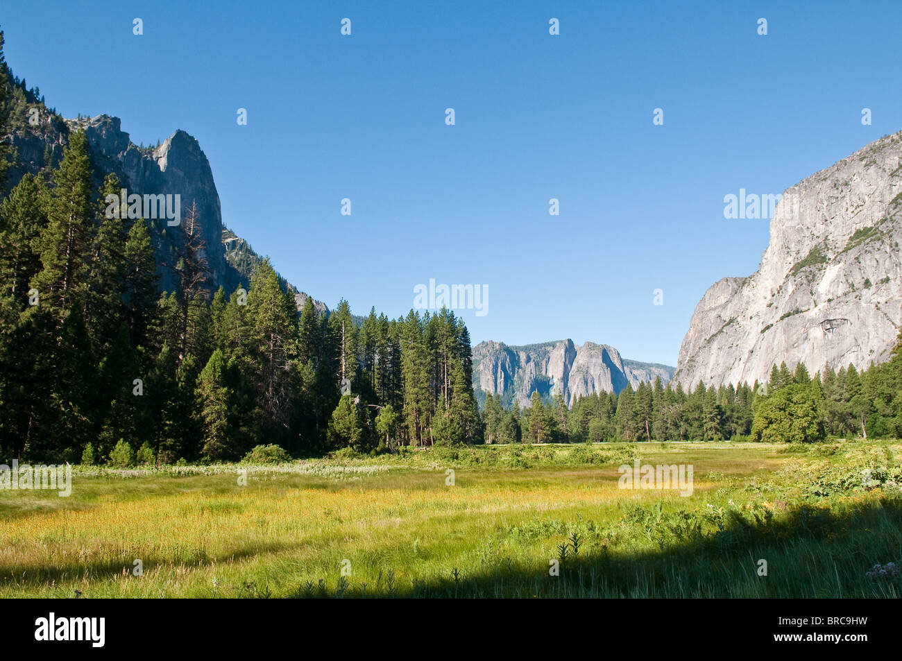 Typical landscape in Yosemite National Park, California, USA - Stock Image