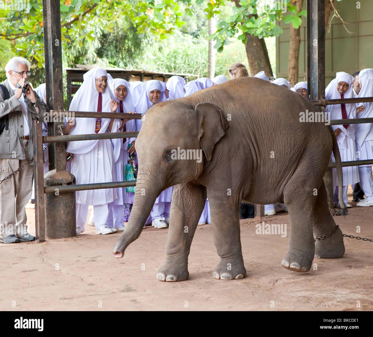 Local schoolchildren  watching elephants in The Pinnawela Elephant Orphanage - Stock Image
