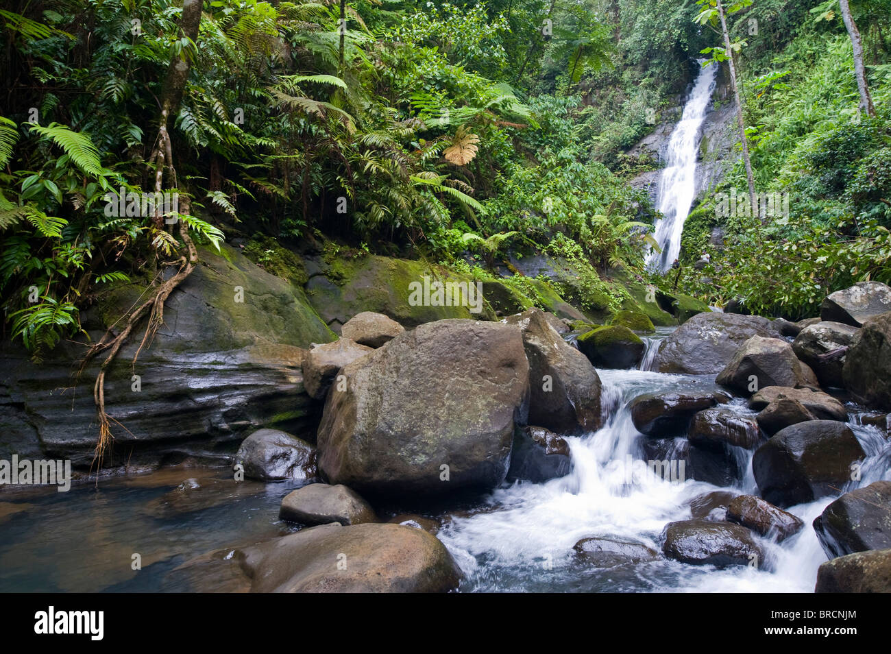 waterfall, Cocos Island national park, Costa Rica, East Pacific Ocean - Stock Image