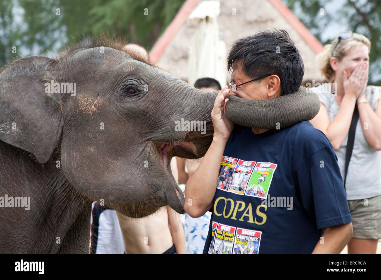 Tourist posing with an elephant at a holiday resort in Thailand Stock Photo