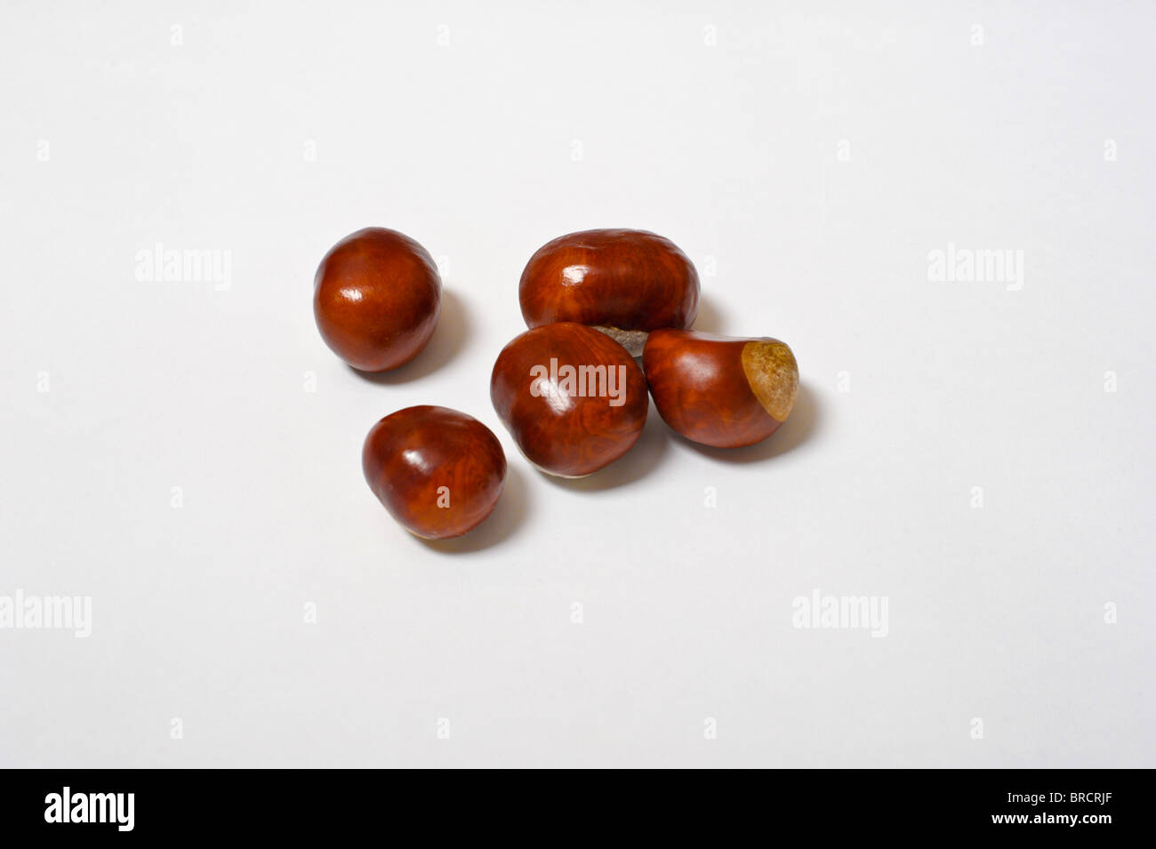 Five shiney conkers on a plain white background - Stock Image